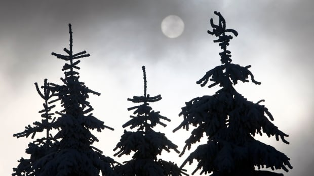 Conifer forest expansion blamed for boosting global warming