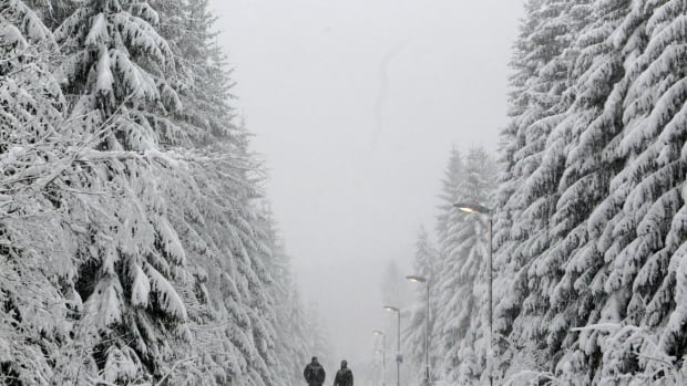 The expansion of dark green conifer forests in Europe may actually be contributing to global warming, a new study in the journal Science suggests.