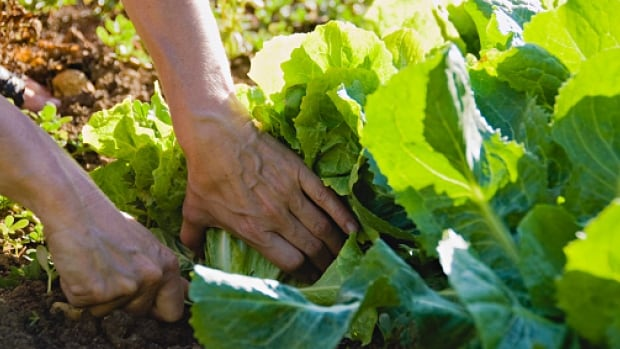 There are approximately 18 urban farm businesses operating in Vancouver
