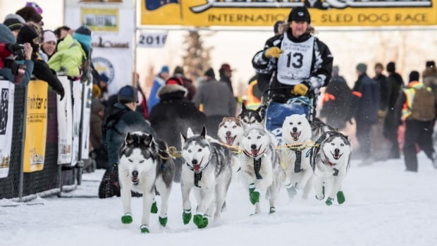 Musher Tony Angelo departs the starting line of the Yukon Quest sled dog race in Fairbanks, Alaska, Saturday.