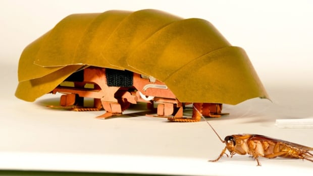 A palm-size prototype robot, called the Compressible Robot with Articulated Mechanisms, or CRAM, is about 20 times the size of the roach that inspired it. And it's simple and cheap.
