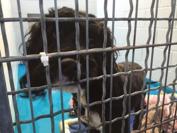 seized dog
