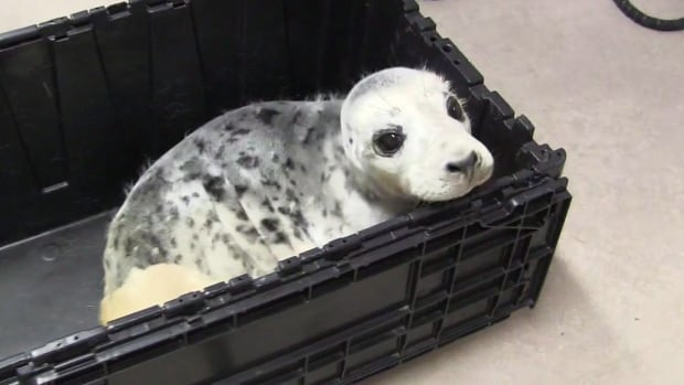 An injured grey seal pup, tentatively named Sammy, arrived at Hope for Wildlife on Thursday after being hit by a vehicle.