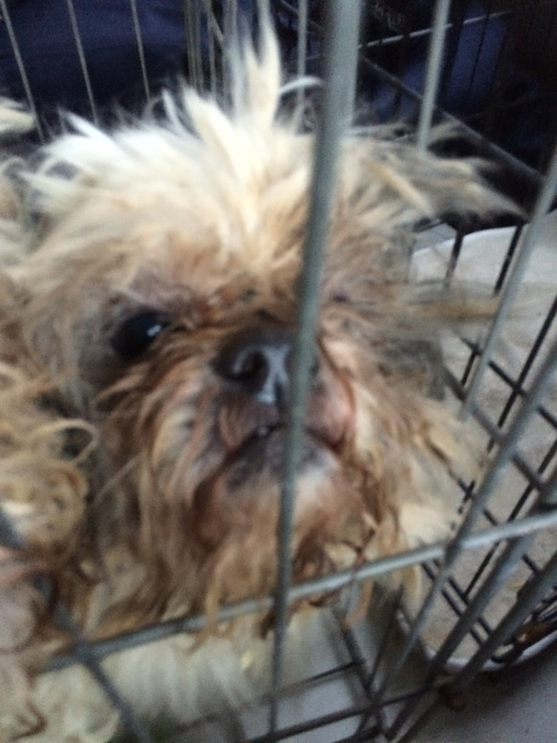 Annapolis Valley couple faces animal cruelty charges for