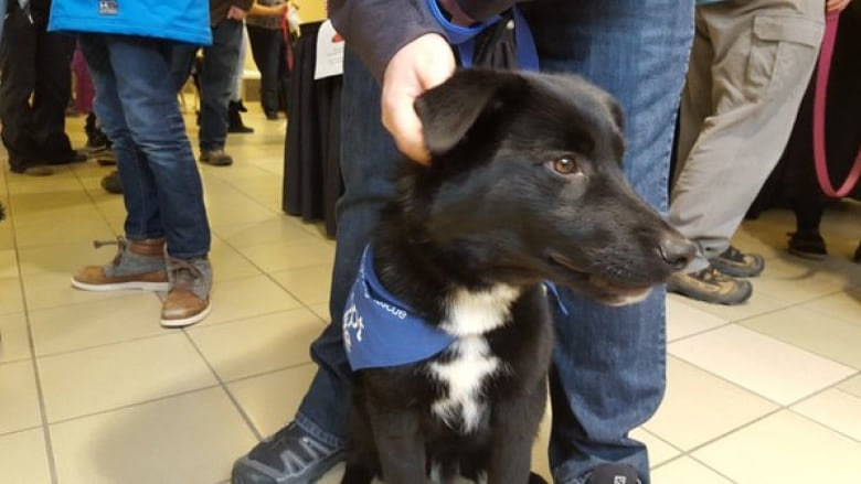 Rcmp Dogs For Adoption