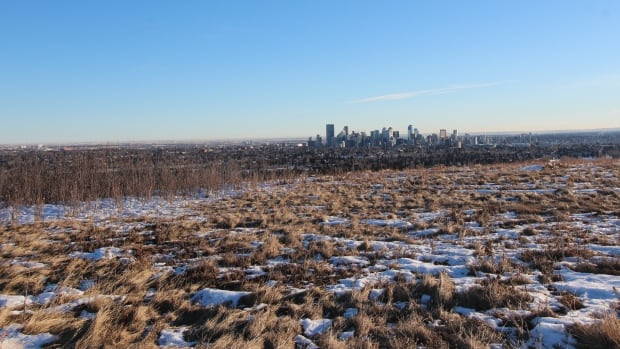 Looking over a sea of Calgary brown on Nosehill Park, looking towards downtown.