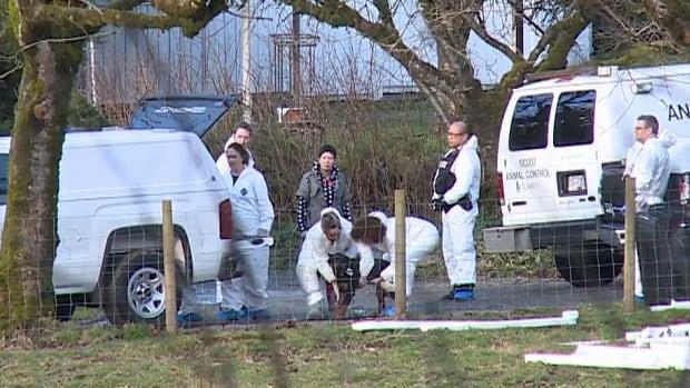 Officials put a dog into a van in Surrey, B.C.