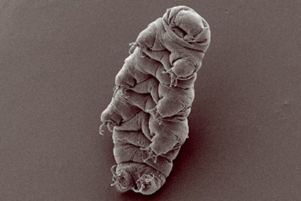 Indestructible tardigrades will live until the dying Sun boils Earth's oceans