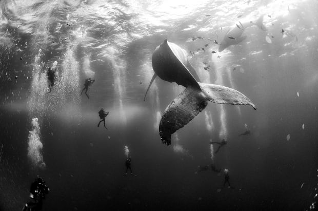World Press Photo nature winner 2016 Anuar Patjane Floriuk humpback