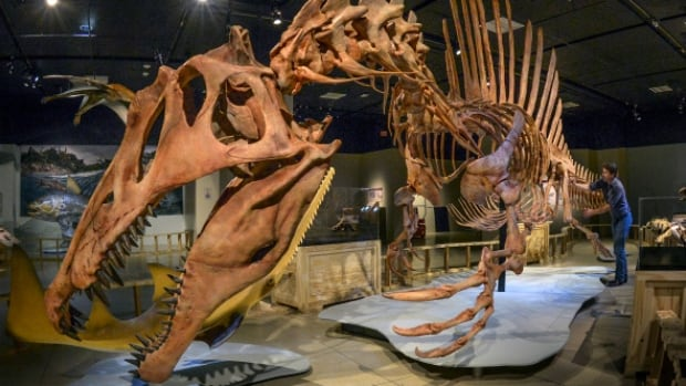 Meet Spinosaurus, the largest predatory dinosaur yet discovered, and hear the incredible story of how this prehistoric giant was almost lost to science, before being brought back to light with the help of a remarkable young paleontologist.