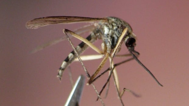 Wisconsin Confirms 1st Human West Nile Cases of the Year