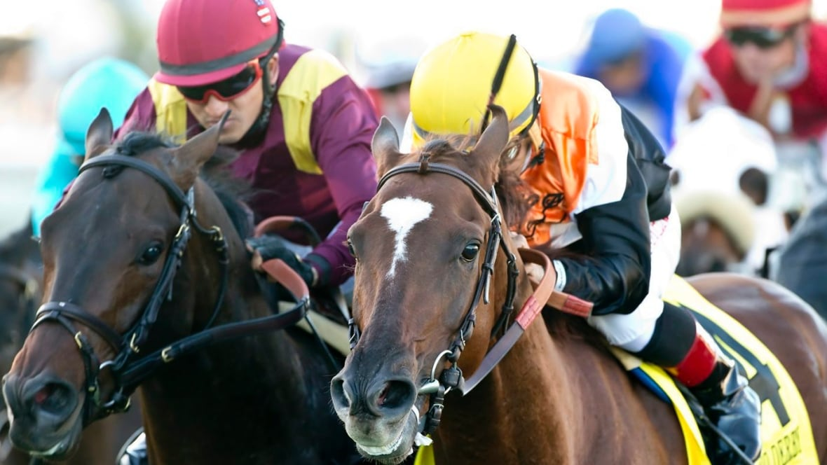 Northland Horse Racing