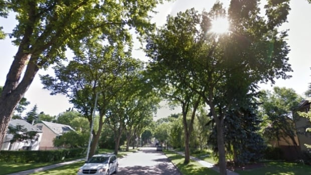 The city is hoping to protect the leafy nature of Edmonton's mature neighbourhoods.