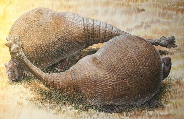 Doedicurus glyptodont