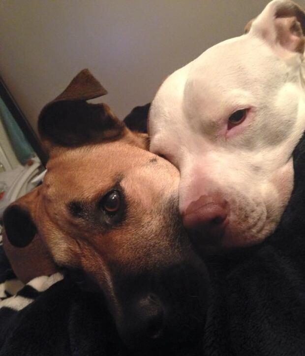 Sherry Lafournie's dogs: Braxton