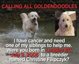Goldendoodle Facebook post
