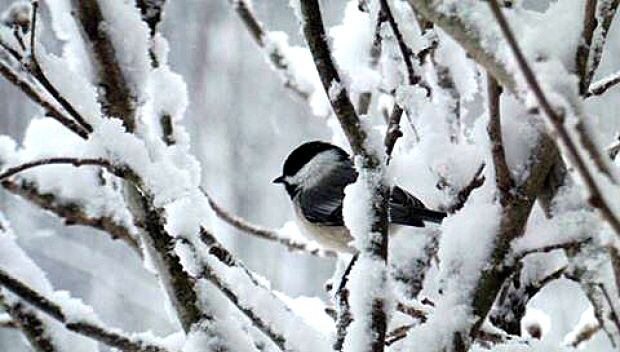 Bird in snowy tree