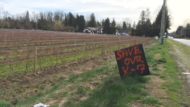 One of several signs along Bradner Road calling for grade 6 and 7 classes to remain at Abbotsford's rural schools.