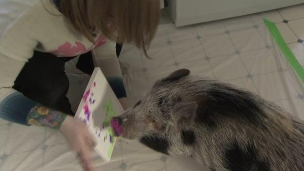 Izzy the Pig