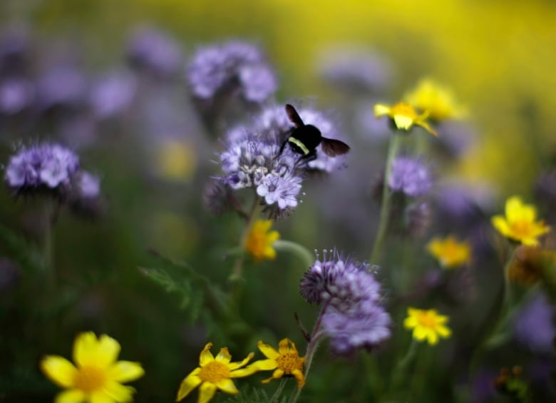 Bees, butterflies and other pollinators face extinction: UN