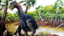extinct bird