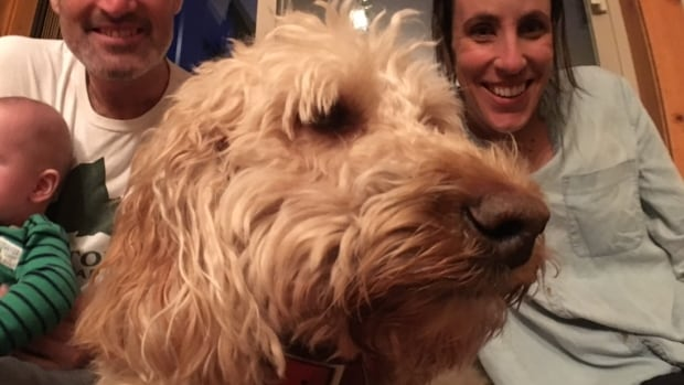 Goldendoodle Scout is back with his Whistler B.C. owner's family after going missing Feb 5th.