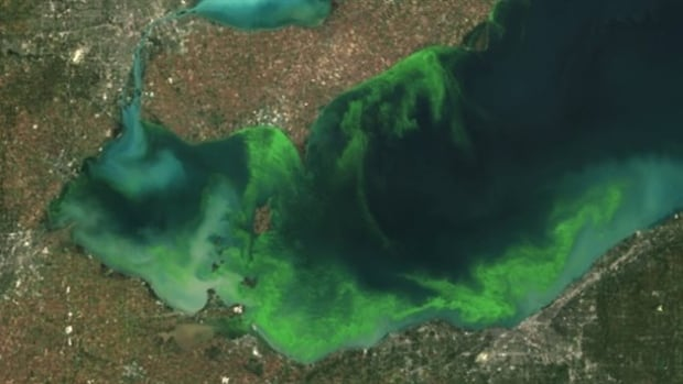 Satellite image of algae bloom on Lake Erie 2011 According to NOAA it was the worst in decades fed by phosphorus mainly from farm fertilizer runoff and sewage treatment plants, leaving behind toxins that have contributed to oxygen-deprived dead zones where fish can't survive.