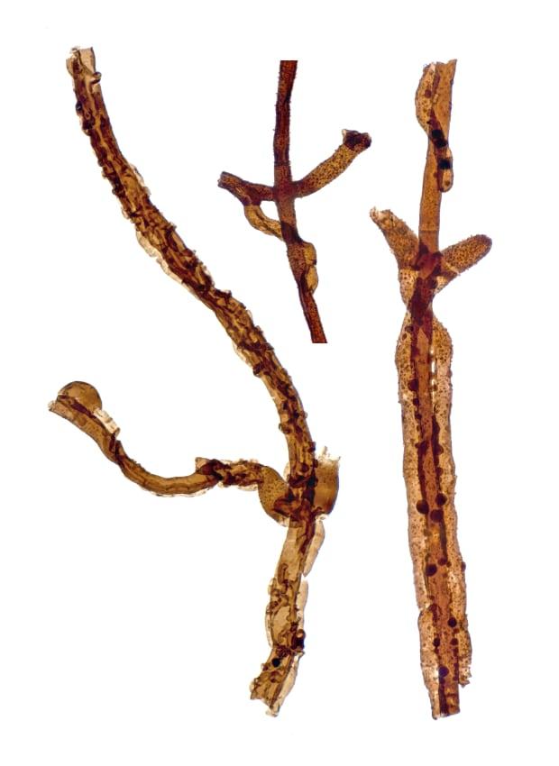 Filaments of Tortotubus