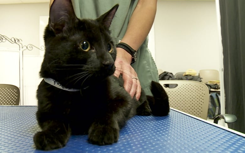Pet euthanasia: Finding peace putting animals down