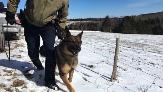 RCMP police dog Dutch has searched 22 kilometres as part of efforts to find Stephens.