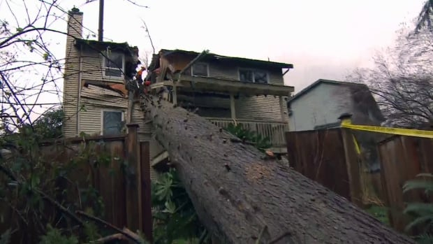 Jill Calder was killed early Thursday morning when this tree fell through her home.