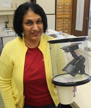 Dr. Christine Noronha with her new wireworm trap