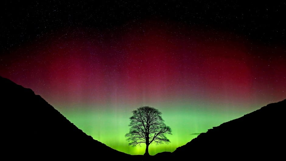 The Northern Lights shine over the Sycamore Gap at Hadrian's Wall in Northumberland, northeast England on Monday.