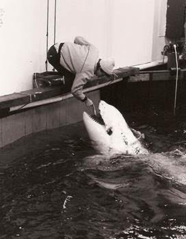 Tilikum's former trainer says dying orca was once 'gentle, passive