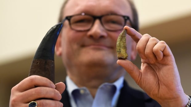 Hans-Dieter Sues, chair of the Department of Paleobiology at the Smithsonian's National Museum of Natural History, holds up a tooth of a new dinosaur, Timurlengia euotica, right, in comparison to the tooth of a Tyrannosaurus rex, left, following a news conference in Washington, Monday, March 14, 2016.