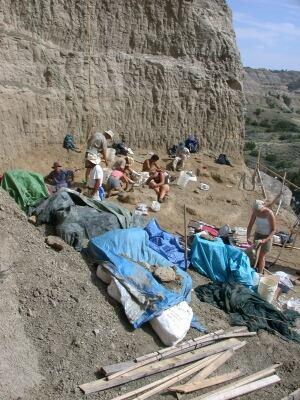 t. rex excavation