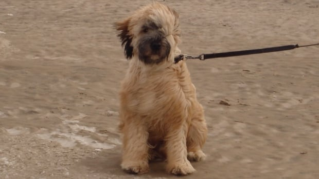 Ava Myjak's nine-year-old wheaten terrier Mimi was diagnosed with bone cancer and put down a year ago in January. Myjak says her pet's death felt the same as losing a family member.