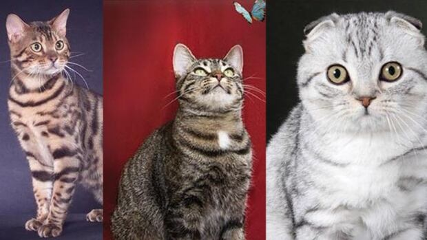 Edmonton Cat Fanciers Club