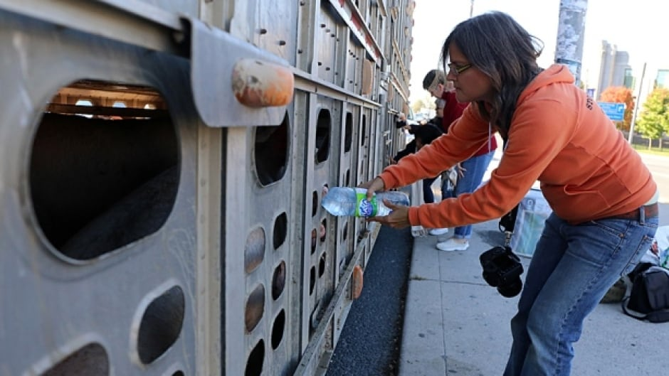 Anita Krajnc was charged with criminal mischief when she pushed a water bottle into a truck-load of pigs on their way to slaughter.