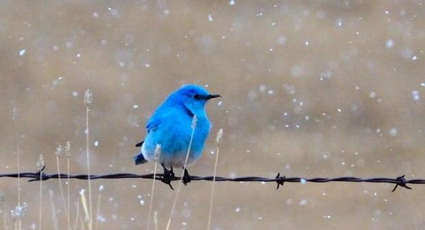 Bird in Calgary