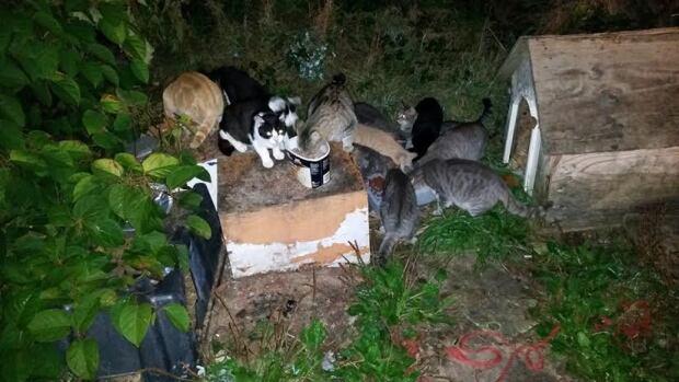 Feral cat colony in nova scotia