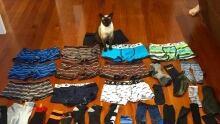 Cat steals underwear