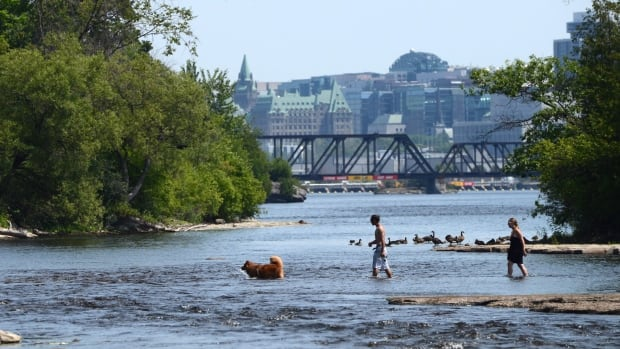 A couple and their dog go for a cool down swim in the Ottawa River in Gatineau, Que. during a heat wave in July 2015.