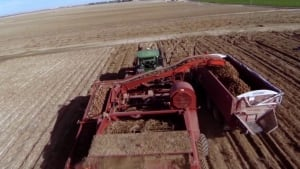 si-potato-field