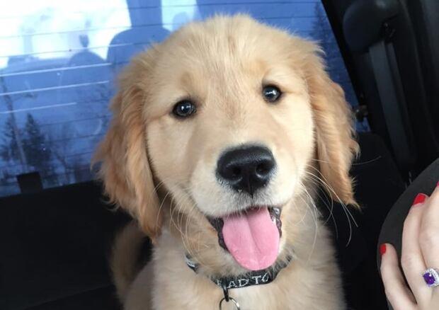 PuppyDay-8