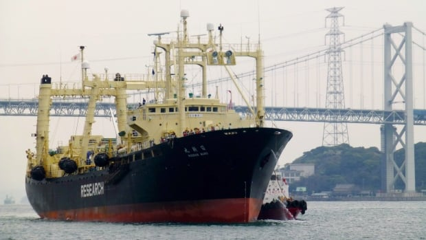 In this April 2014 file photo, the Japanese whaling vessel Nisshin Maru returns to a port, from the Antarctic Sea, in Shimonoseki, western Japan.