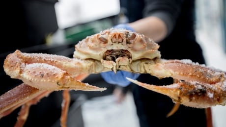 P.E.I.'s crab fishery OK with new rules — as long as they don't get 'too drastic'