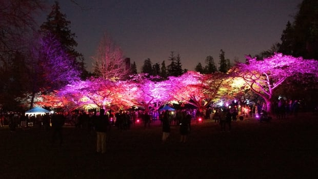 Cherry blossoms in Stanley Park were lit up by artists Stuart Ward and Ben Z Cooper as part of Vancouver's annual festival celebrating the trees.
