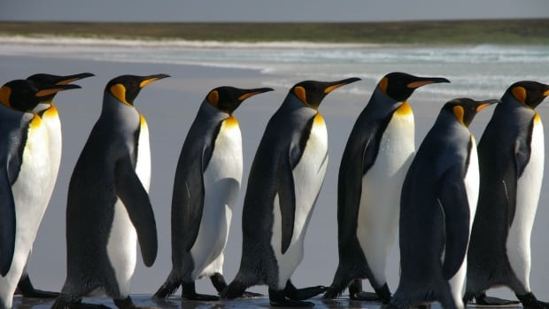Penguins are the latest group to be added to the list of things that citizen scientists can count, monitor, classify or discover.