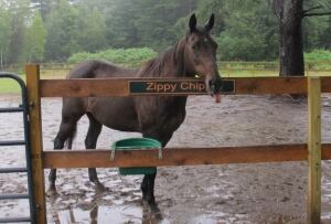Zippy Chippy